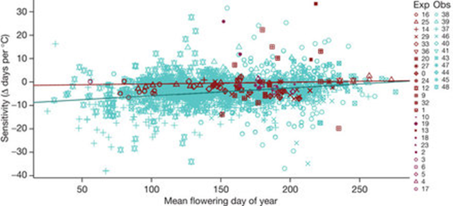 Observed and experimental warming sensitivity of plants as a function of mean flowering day of year. A trend is seen in the observational studies (blue) but not in the experimental studies (red), which means that experimental studies underestimate the observed phenological response to global warming. Wolkovich, et al., 2012