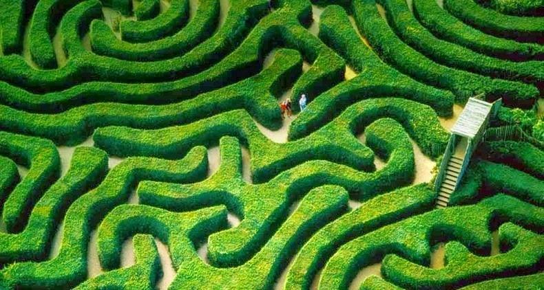 longleat-hedge-maze-2