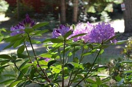 blooming in june (15)
