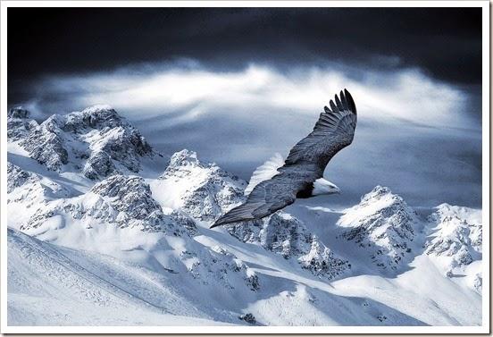 aguila-montanas-nevadas-5200614e19f74