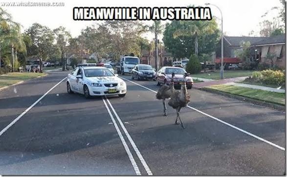 meanwhile-australia-10