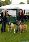 20100513-Bullmastiff-Clubmatch_30979.jpg