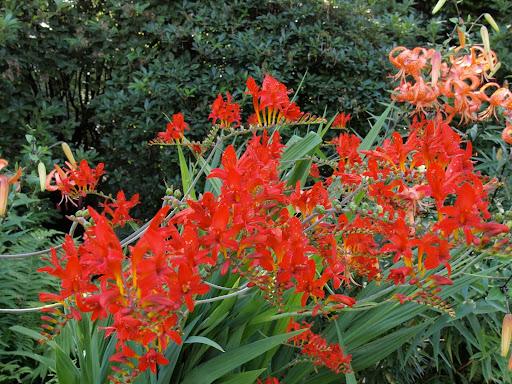 Quali piante per pieno sole un quadrato di giardino for Fiori perenni pieno sole