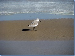 7133 Texas, South Padre Island - Beach access #3 - Sanderling