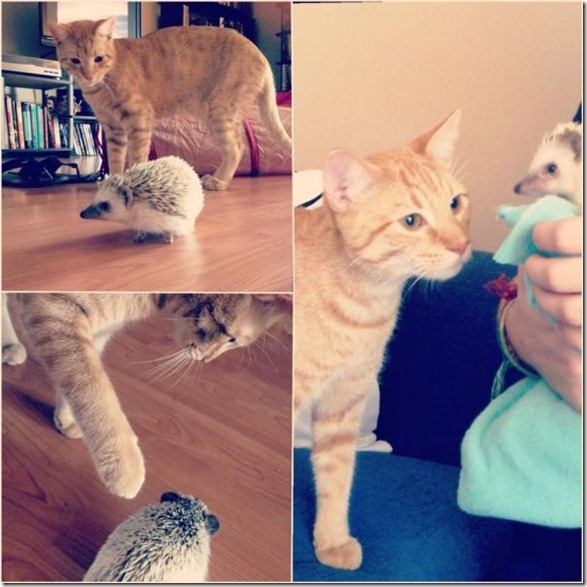 cute-funny-animals-18
