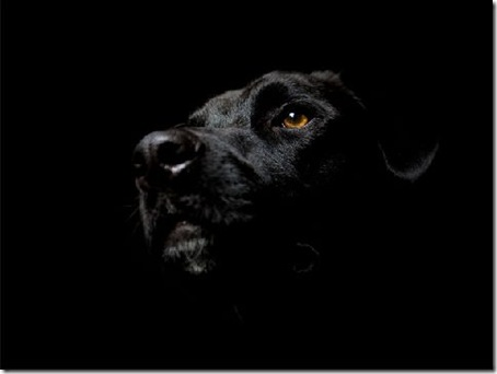 poze desktop negre