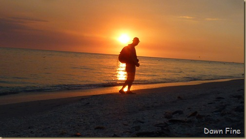 Beach walks sanibel_192