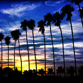 La Jolla Palms by Sharon Soberon - Digital Art Places ( clouds, digital paint effect, san diego, sunset, california, art, art4theglryofgod, palm trees, la jolla palms )