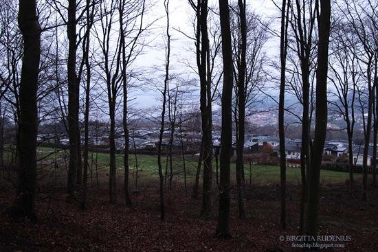 bastad_20111207_skogen