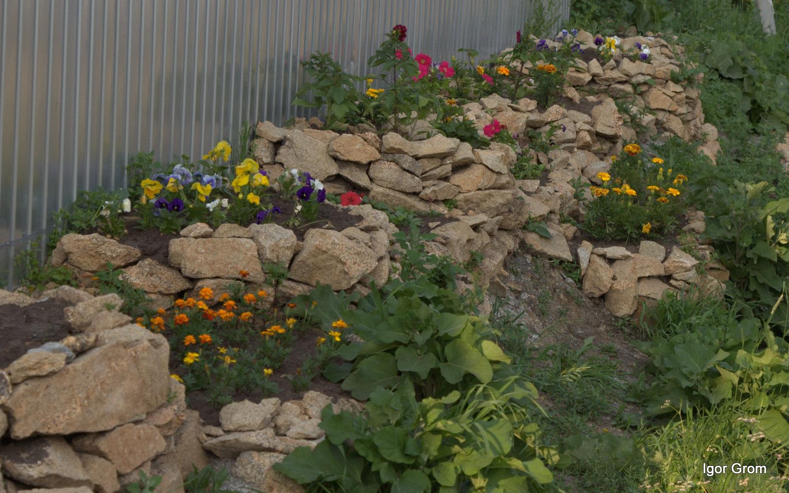Фото клумб из камней с цветами