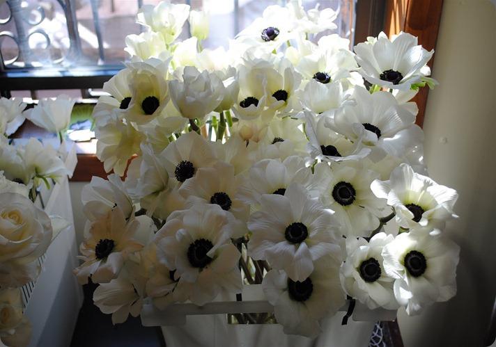 anemone open DSC_0030 rebecca shepherd floral design