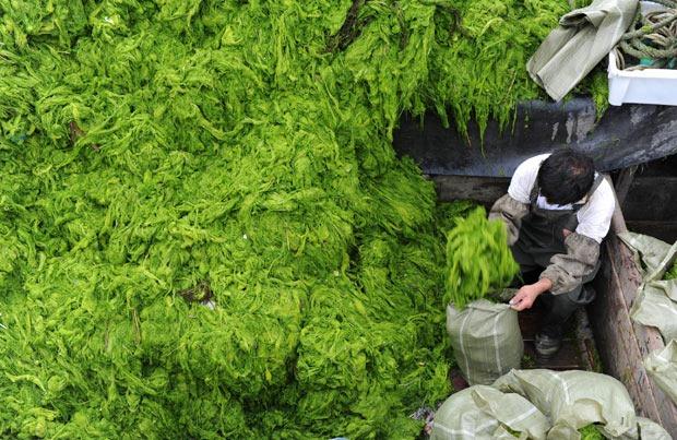 chinese-algae11
