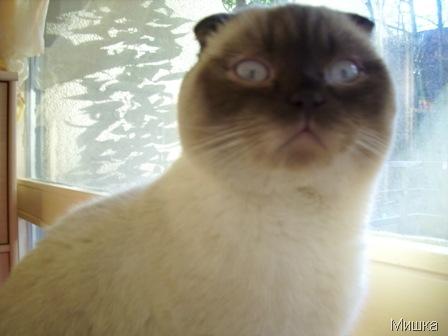 Кот, которому исполнился год