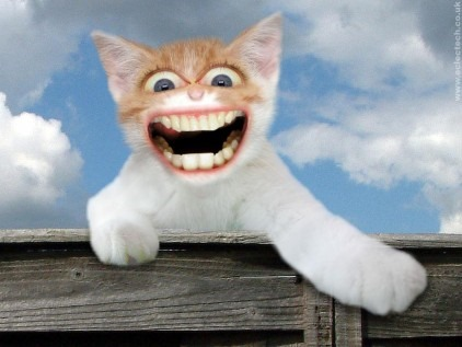 happy-cat-wallpaper_422_36342