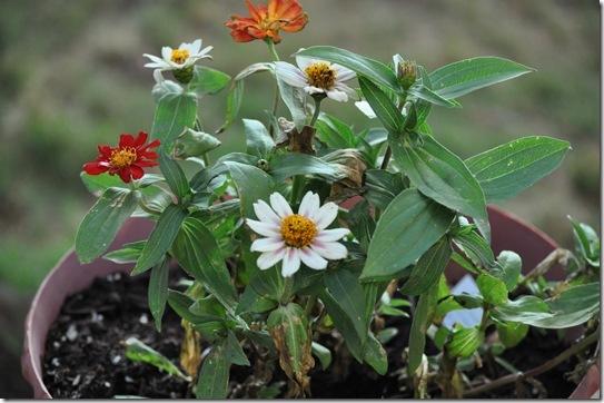 06-08-13 flowers 03