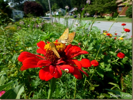 flowers and bugs_035