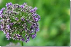 nybg-new-york-botanic-gardens-bronx-008