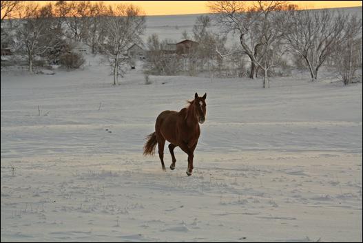 snow horses 035b