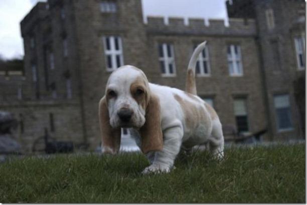 cute-puppies-awww-6