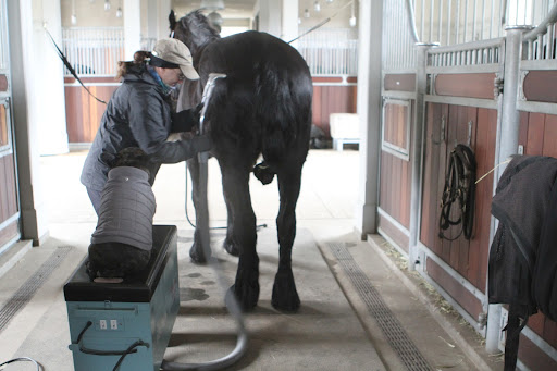 So Betsy, I see that horse vacuums are great grooming tools, as they allow you to quickly and easily remove dirt from the coat.  I've seen the Friesians rolling in their paddocks.  They must get quite muddy.