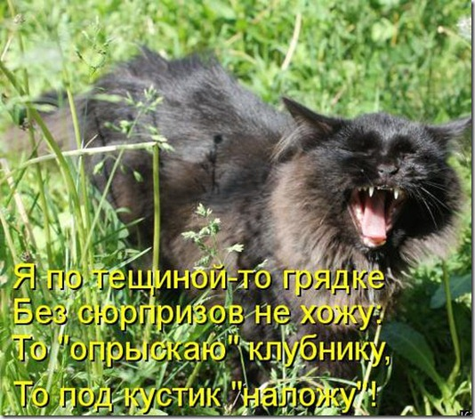 89305575_kotomatritsa_9o
