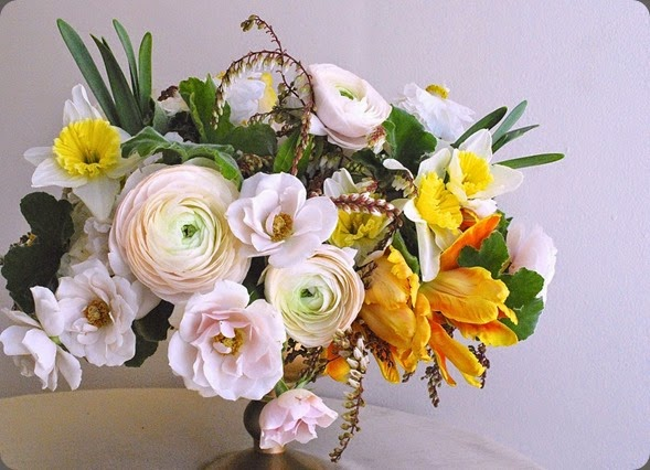 daffodil DSC_0511-1-1024x717 cornelia mcnamara