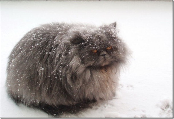 cats-play-snow-1