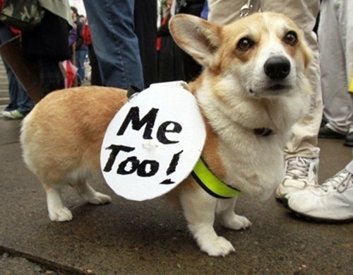 cute-pets-at-occupy-wall-street-16