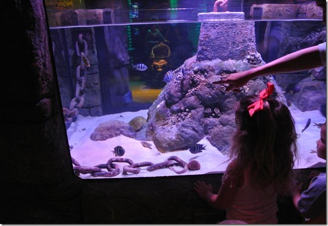 Sea Life Aquarium 057