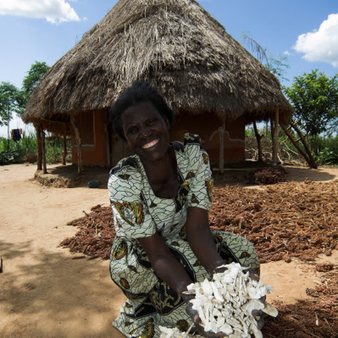 Ahasit group, Uganda. Amongin Ann Grace. 7 children. calls her farm Send A Cow Uganda, because it saved her life. Here with Cassava