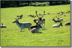 Bradgate Park D50  15-09-2012 10-18-52