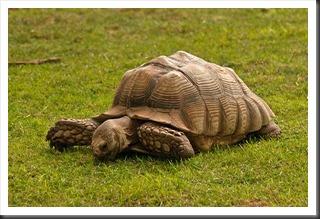 2011Jul30_Reptile_Gardens-1