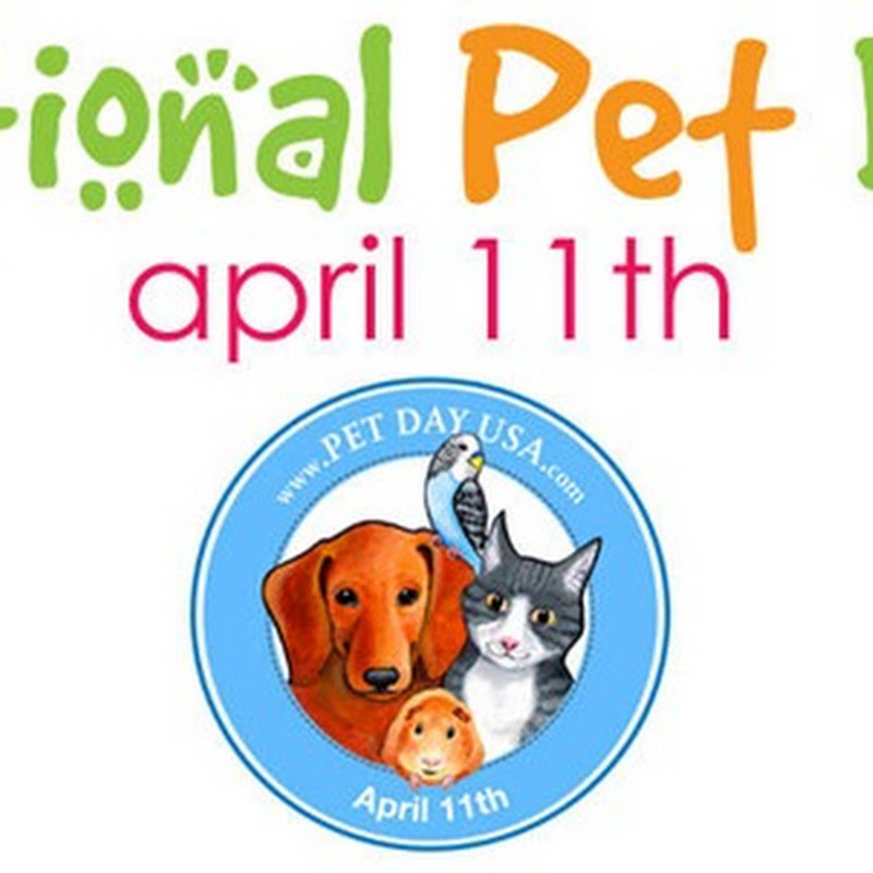 Día Nacional de las Mascotas