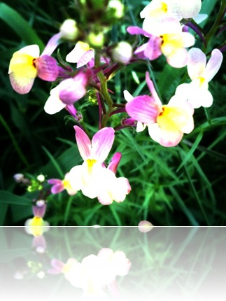June 14 flowers6