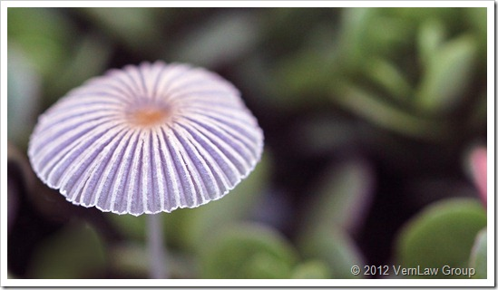 MushroomIMG_0123