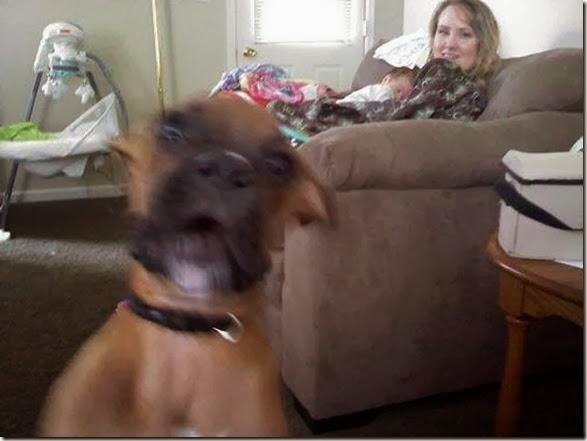 funny-animal-photobomb-4