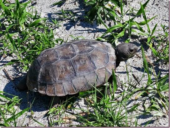 tortoiseIMG_4085