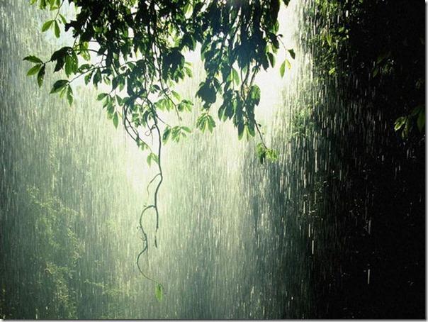 Lindas fotos da chuva (6)