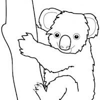 dessins-koalas.jpg