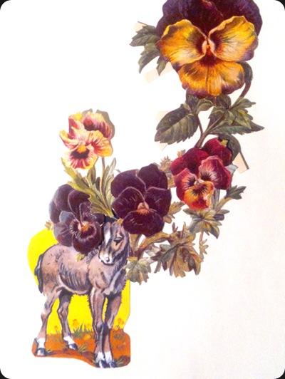 donkey_flowers