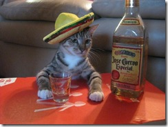 mexican-cat-drinking-tequila-600x450