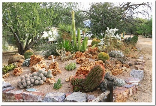 141231_Tucson_Bachs_0071