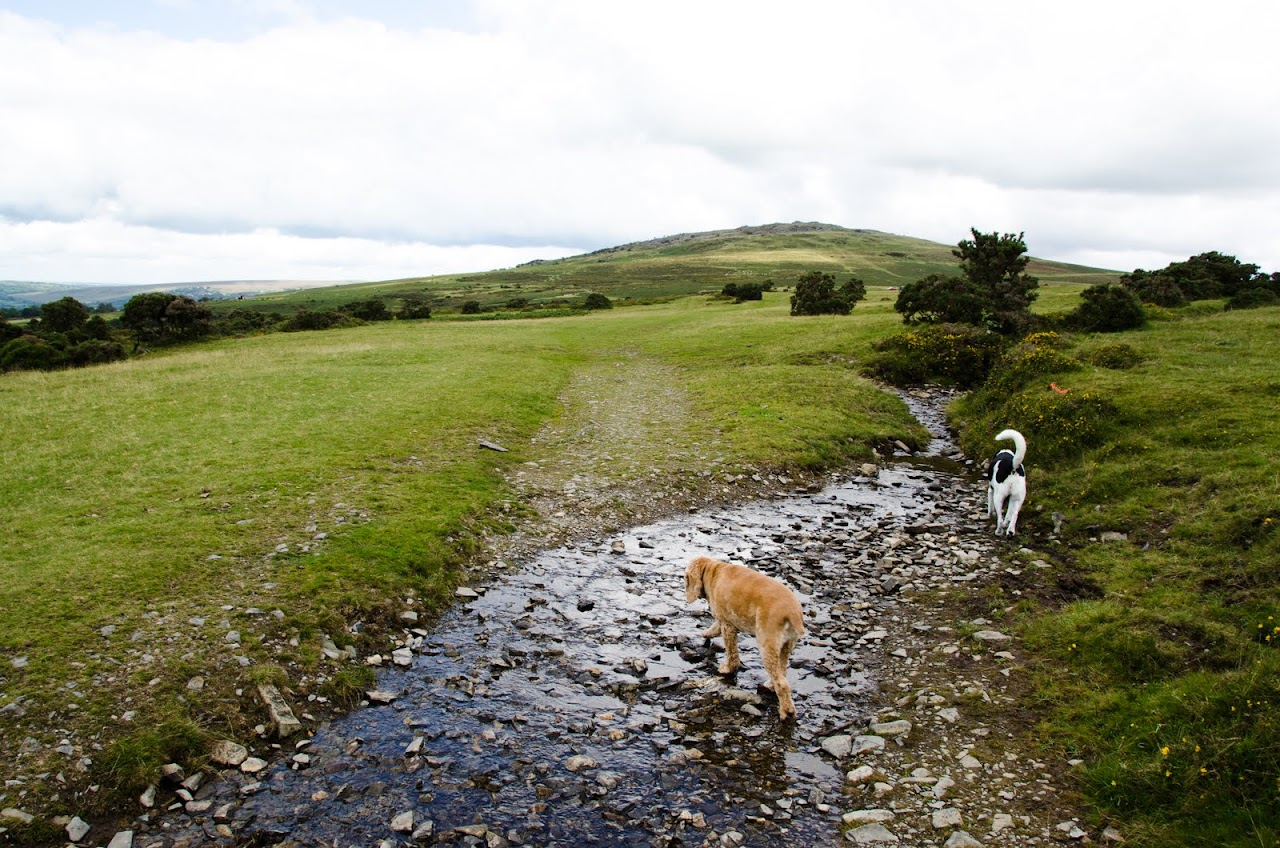 Chewy at Dartmoor