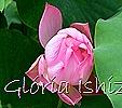 Glória Ishizaka - Flor de Lótus -  Kyoto Botanical Garden 2012 - 5