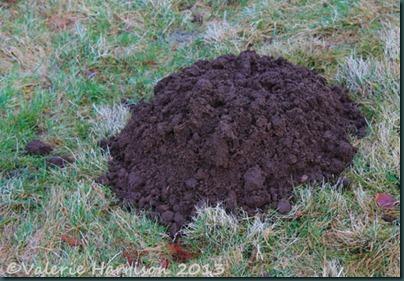 35-molehill