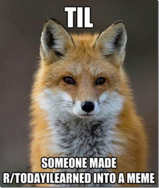 fox-facts-meme-33