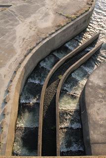 左岸の魚道(下流側)を望む