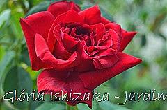33  - Glória Ishizaka - Rosas do Jardim Botânico Nagai - Osaka