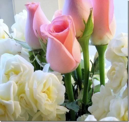 san valentin flores (10)