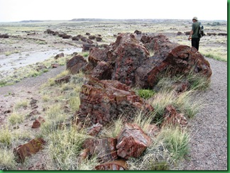 Painted Desert & Petrified Forest 420